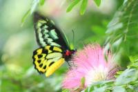 green and yellow on pink1.jpg