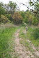 a spring walk in the woods1.jpg
